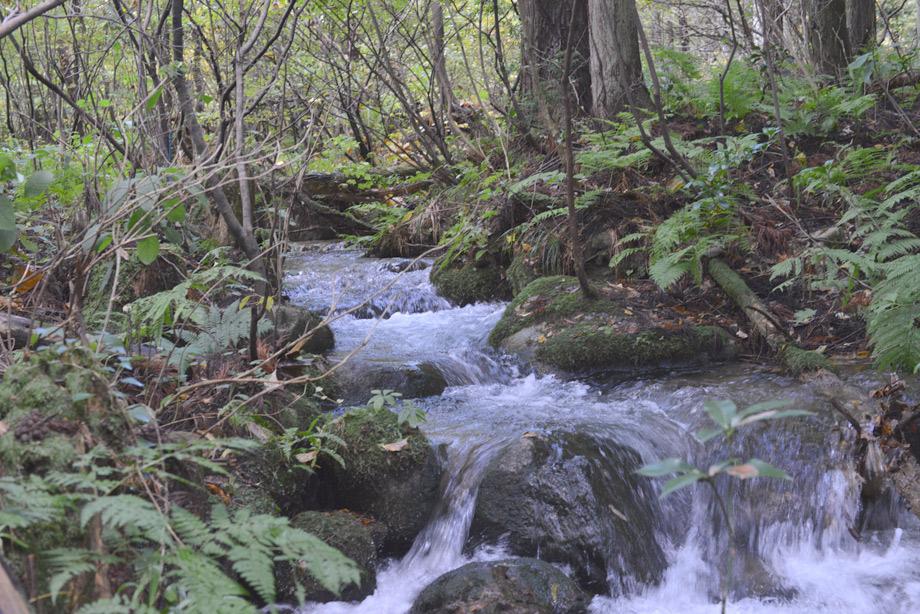 山沿いの川3