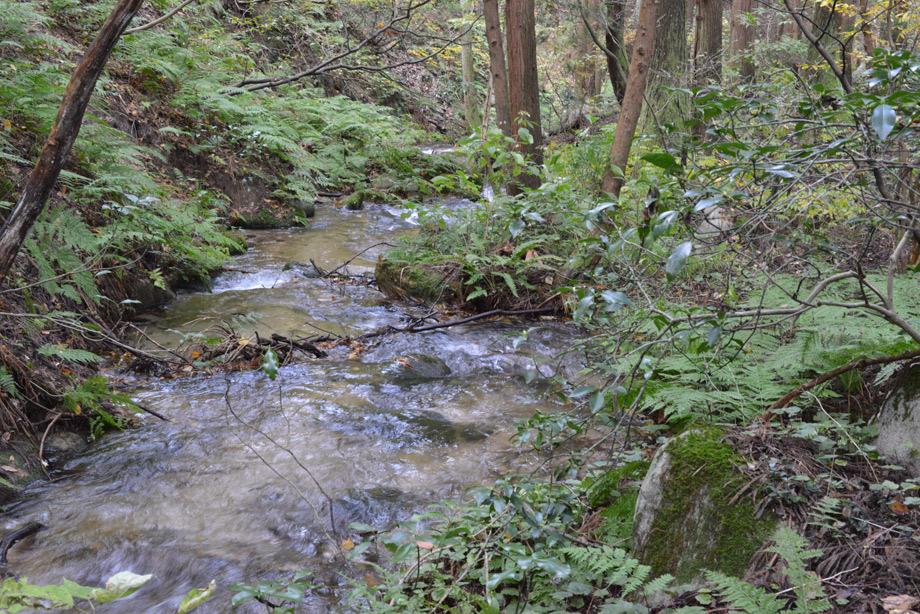 山沿いの川1