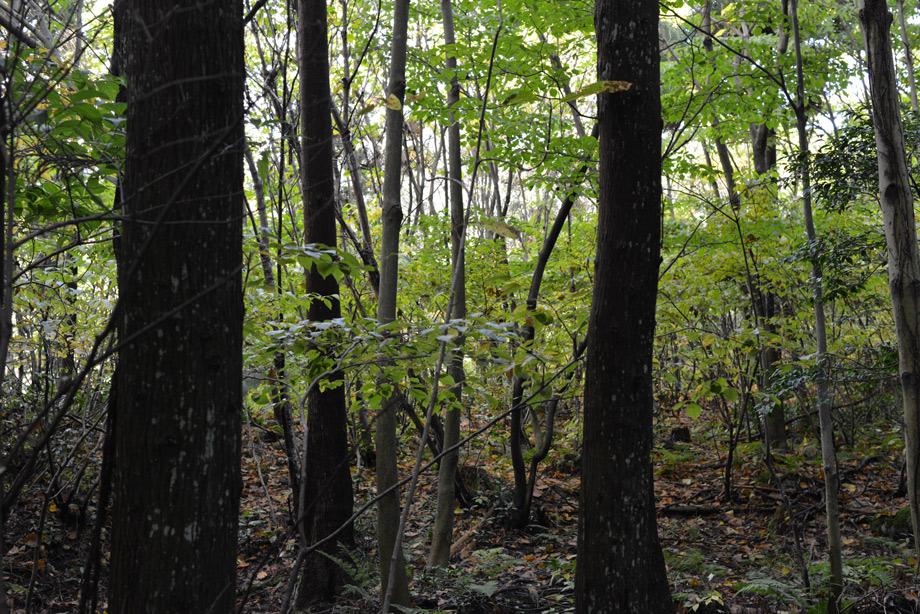 うっそうとした林の中