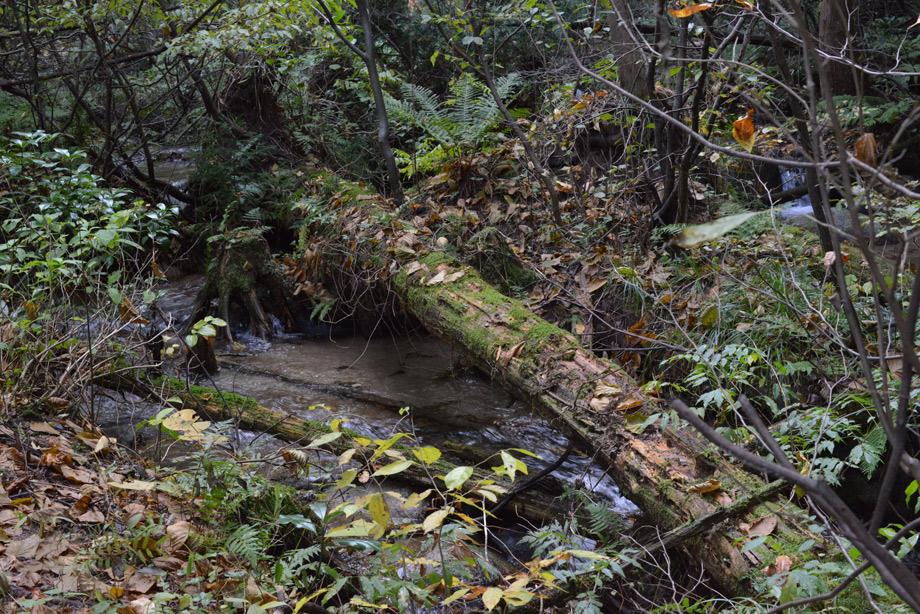 川に倒れる木
