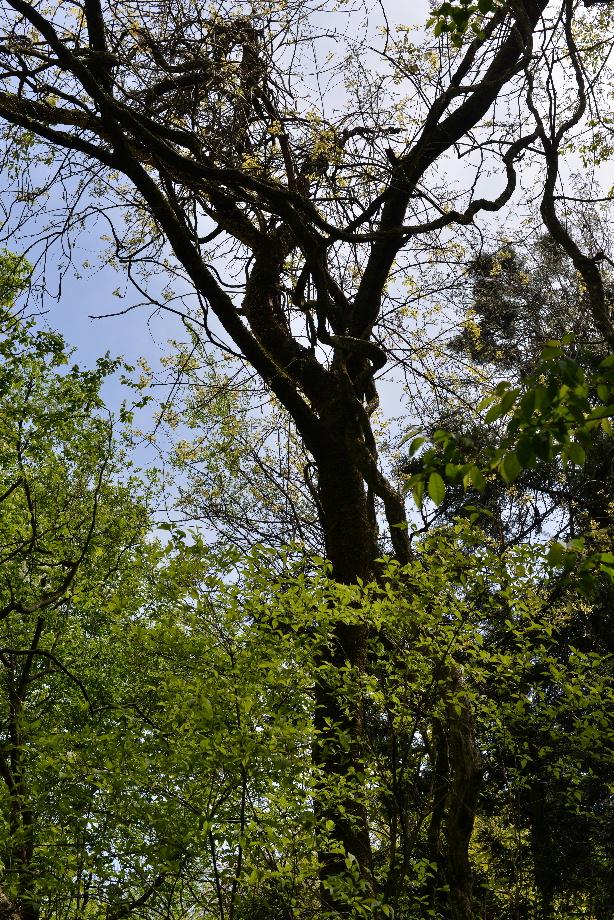 156446109ec1c909281e00ff97e3a50c 五頭自然郷をつくる会「森のこだま」とは 五頭山麓いこいの森