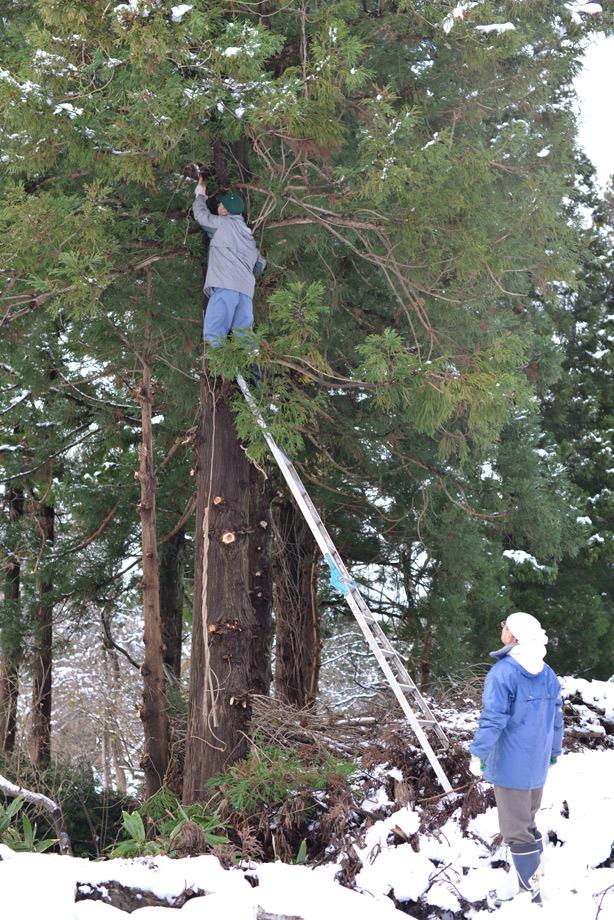 2a5614e6dc04e90843398e3b1465345a 雪が降っても作業は続く 五頭山麓いこいの森