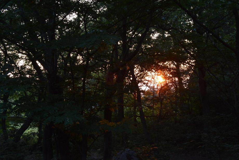 DSC_0308 バンガロー完成!燻製器の初お目見え 五頭山麓いこいの森