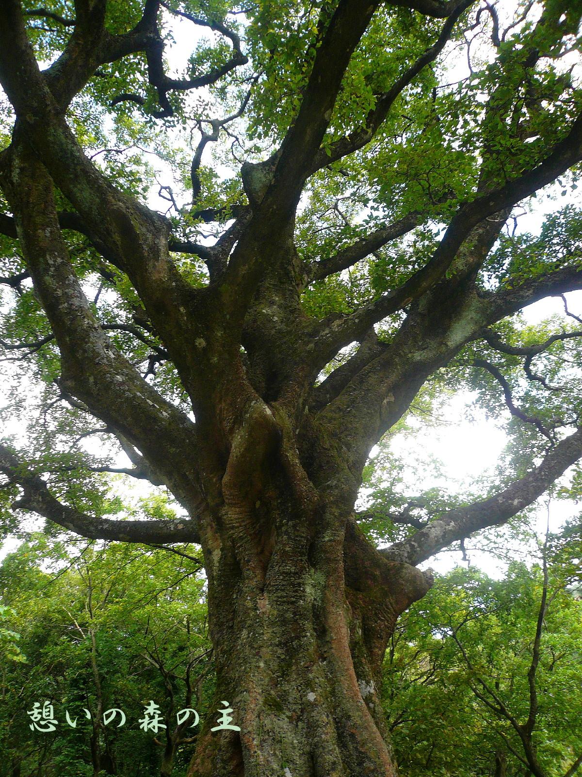 憩いの森の主