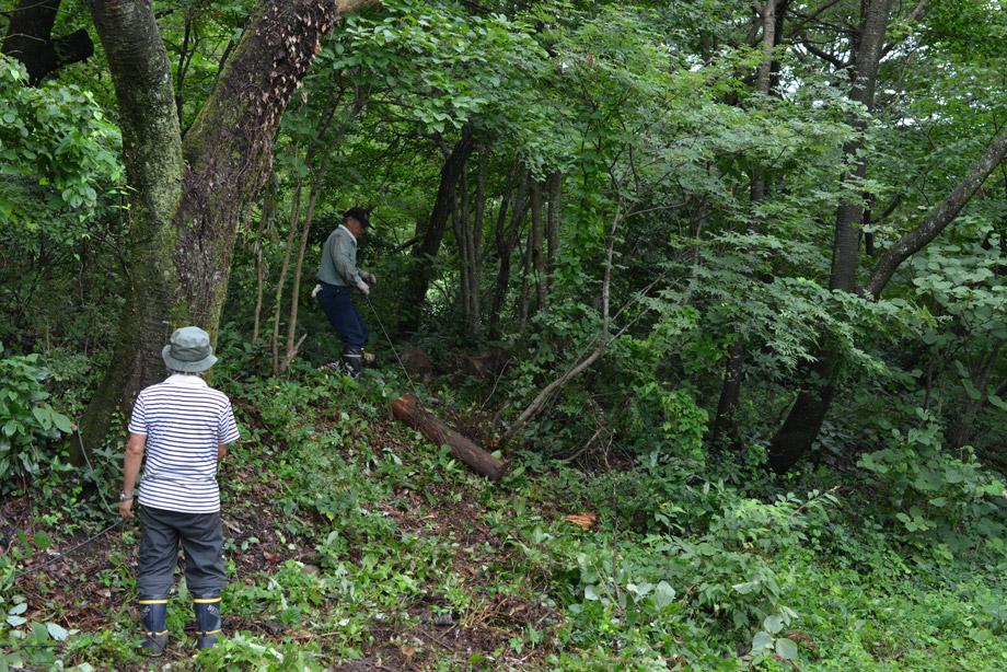 2b636796f0c6f34a2f31c3bdec5ca081 朽ちた丸太を移動させてました 五頭山麓いこいの森