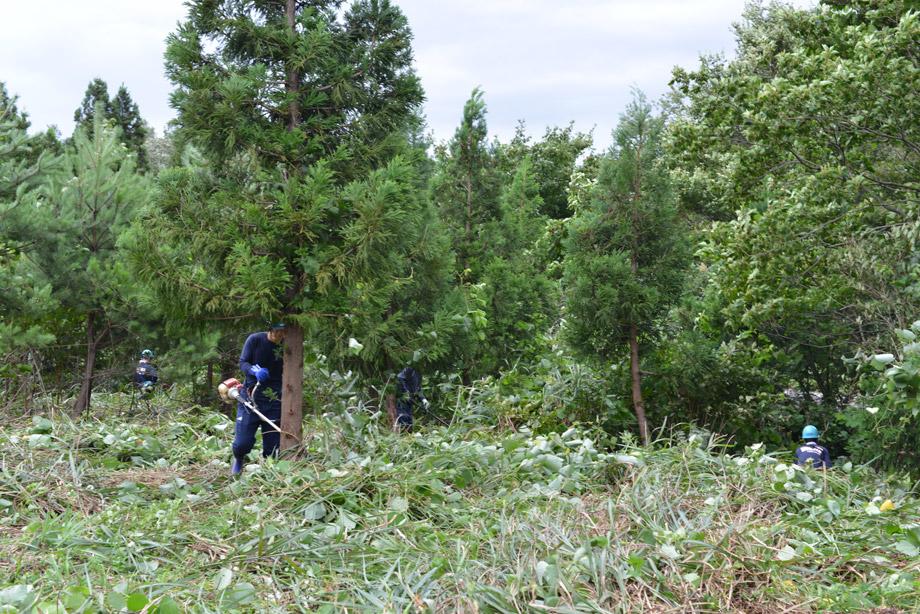 5cd830482fb492f8e908ca8eaa88e173 防災ボランティア訓練を通した里山づくり 五頭山麓いこいの森
