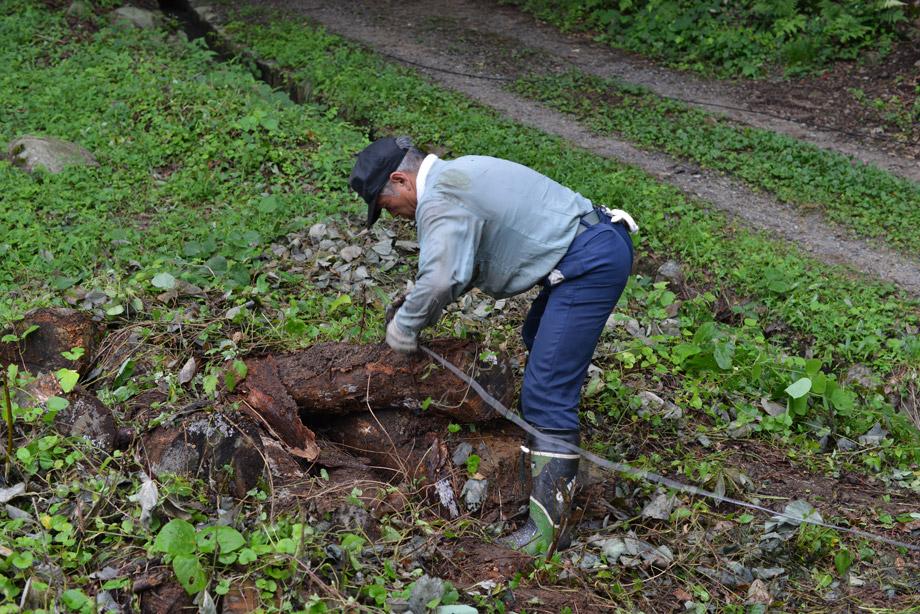6878c1ad7c699883357df00b030d6455 朽ちた丸太を移動させてました 五頭山麓いこいの森