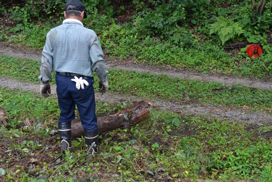 71f54a969da23d0021bf6c51ee90cbb3 朽ちた丸太を移動させてました 五頭山麓いこいの森