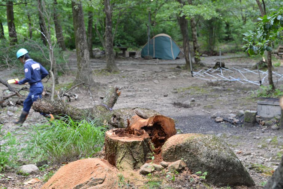 木の伐採4