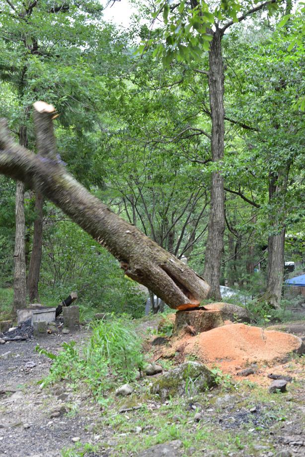 木の伐採3