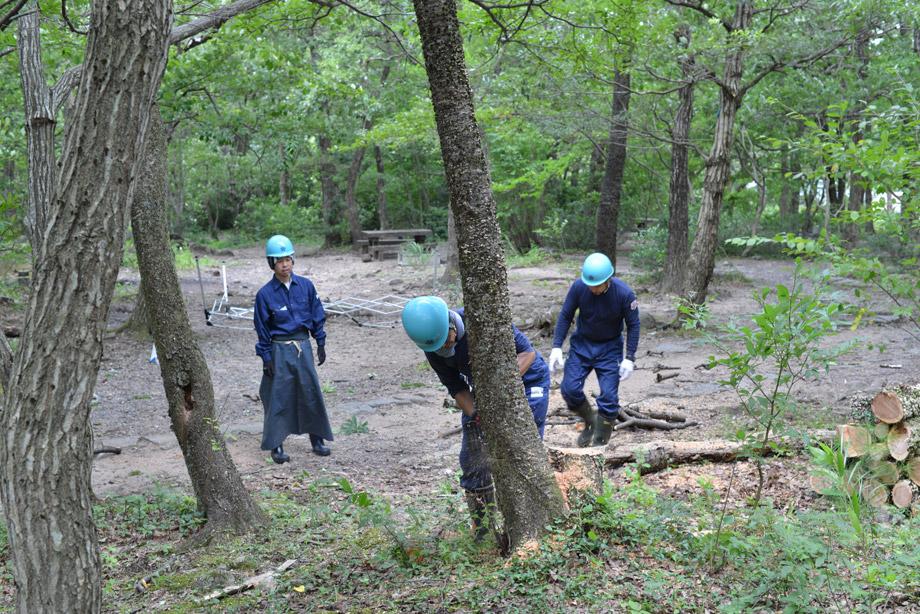 木の伐採1