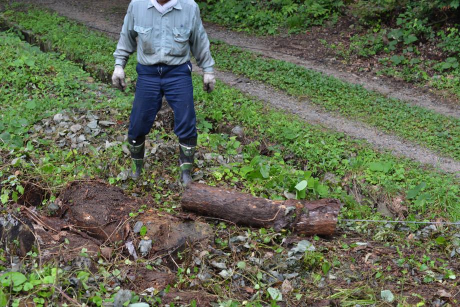 b59970440fdb1eda2fdd4b9e2693489d 朽ちた丸太を移動させてました 五頭山麓いこいの森