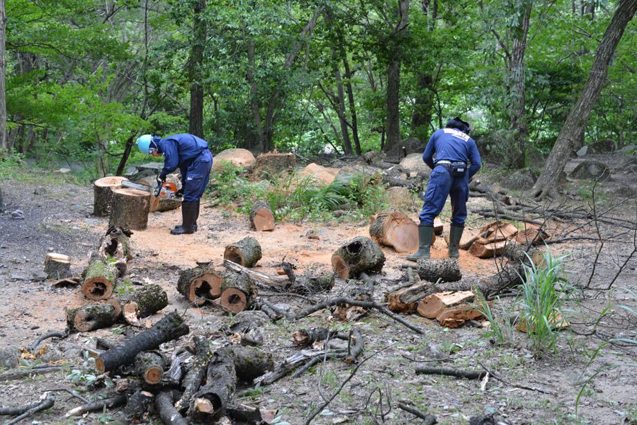 木の伐採5