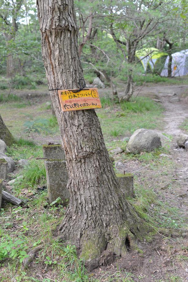 0124e52a41b2ad265ce796c742a8354f 中の人が仕事忘れて散歩してみた 五頭山麓いこいの森