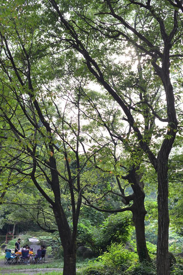 9月の五頭山麓いこいの森