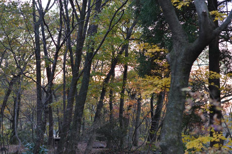 夕焼け空のいこいの森