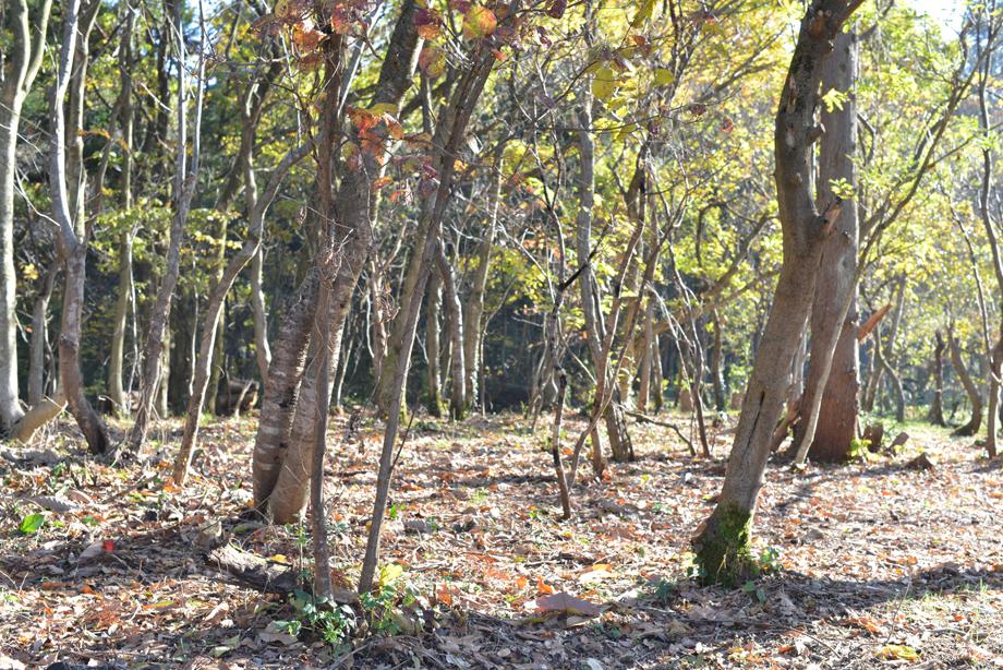 7bbf18dcfa846edf33f8746fc6a8f4f1 散策路が楽しめます 五頭山麓いこいの森