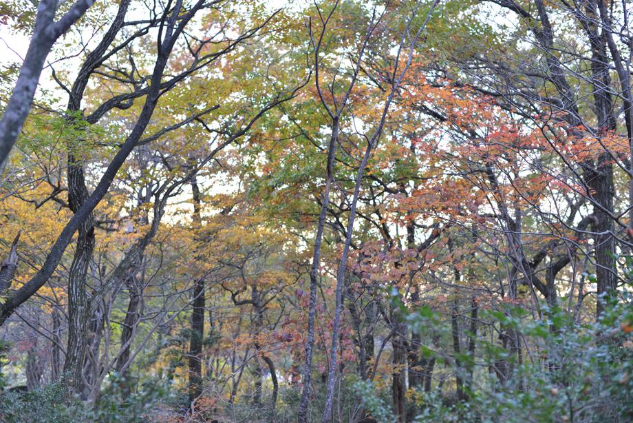 いこいの森の紅葉