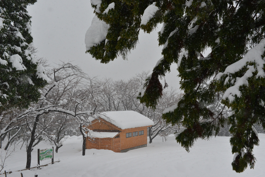 大雪になった2014年12月7日の五頭山麓いこいの森