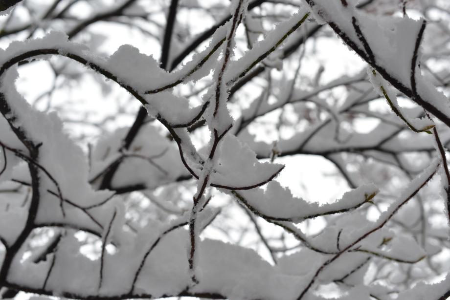 枝と雪の迷路