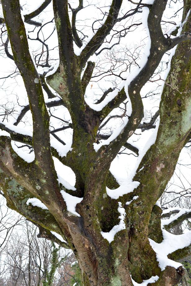 五頭山麓いこいの森の主の冬