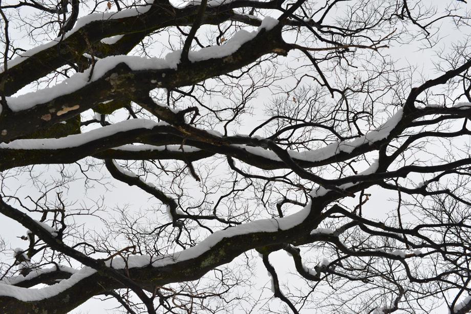 冬の森で見上げる