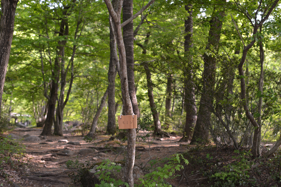16245555679443c9ef80922e6327b7b3 この木何の木?気になる木 五頭山麓いこいの森