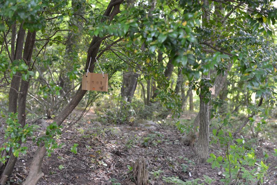 172cbd37fd49cf600bf4a73e4bc35105 この木何の木?気になる木 五頭山麓いこいの森