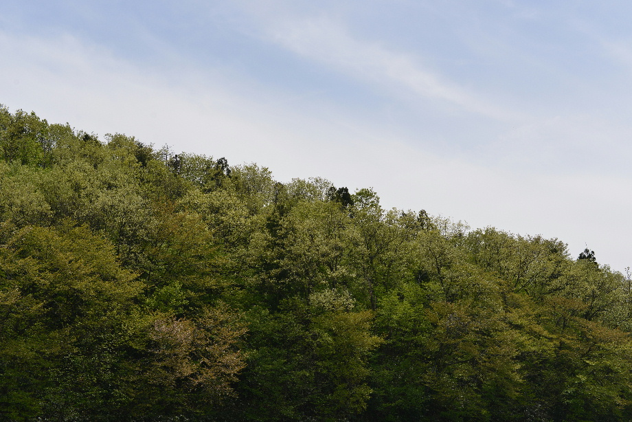 32a5aad48e269014f654cdca36c11d81 五頭自然郷をつくる会「森のこだま」とは 五頭山麓いこいの森