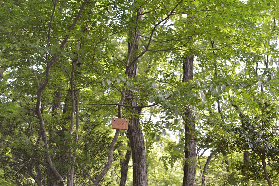 8d85e59243007f7c8e75469892ee73f8 この木何の木?気になる木 五頭山麓いこいの森