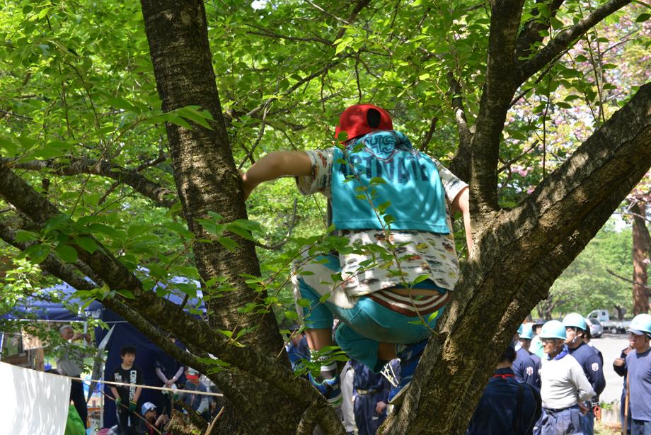 木登りしてますね20150502