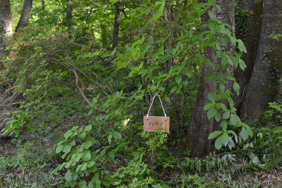 d869aa795043c76f6aef3d6cd1fa9f0e この木何の木?気になる木 五頭山麓いこいの森
