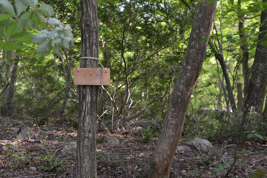 f41610e4a044f298942b65037a5e4ef9 この木何の木?気になる木 五頭山麓いこいの森