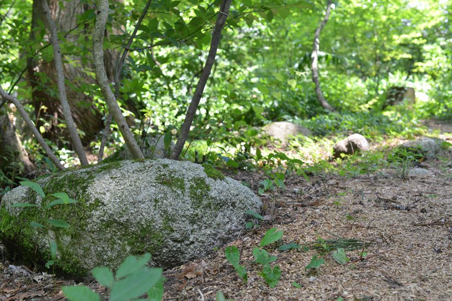 039bd80eb259edb7f13c0e5dedf36f5c 散策してみました 五頭山麓いこいの森