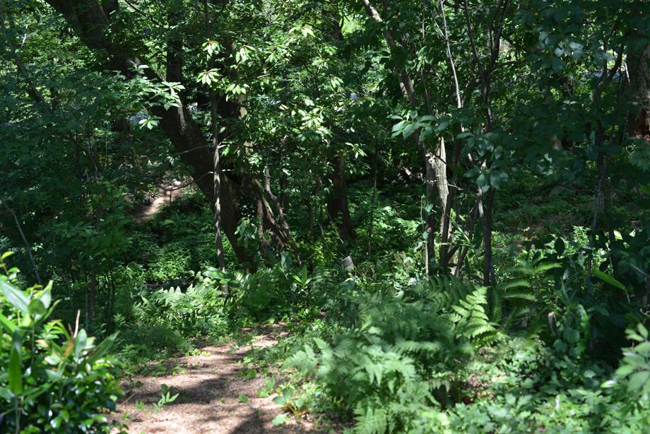 161d1c8437dfcdb2ab5103cbe6f11bca 散策してみました 五頭山麓いこいの森