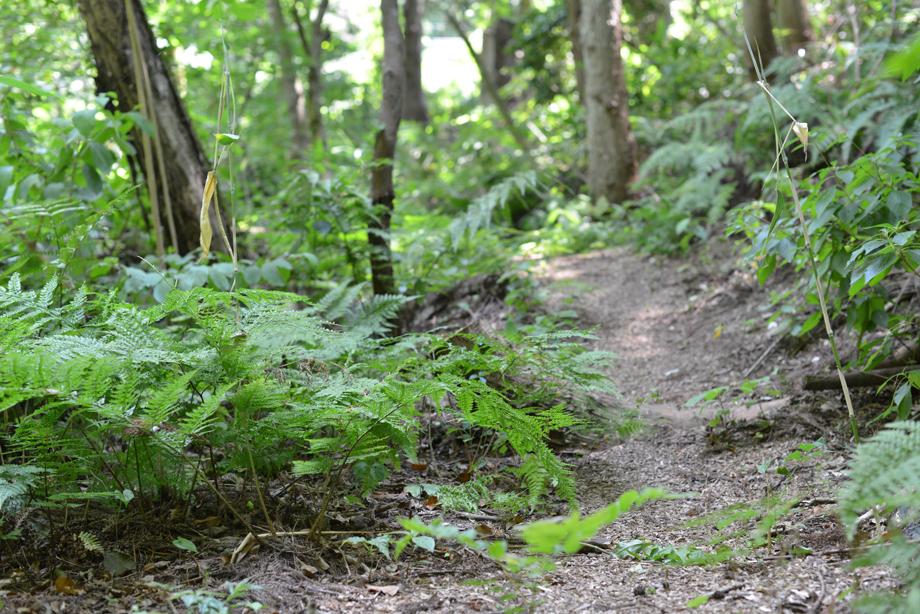 623a144bacaef9e49cd410329ec970d3 散策してみました 五頭山麓いこいの森
