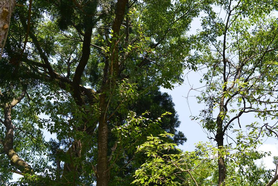 b35423955588b7ddf8161166d5da6b51 散策してみました 五頭山麓いこいの森