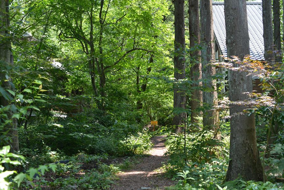 cf31dadaddc3c2046d5f37c75fbd7758 散策してみました 五頭山麓いこいの森