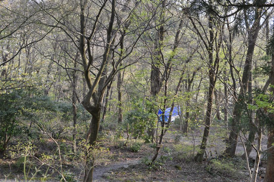 ikoi20170422-01 樹皮の模様いろいろ 五頭山麓いこいの森