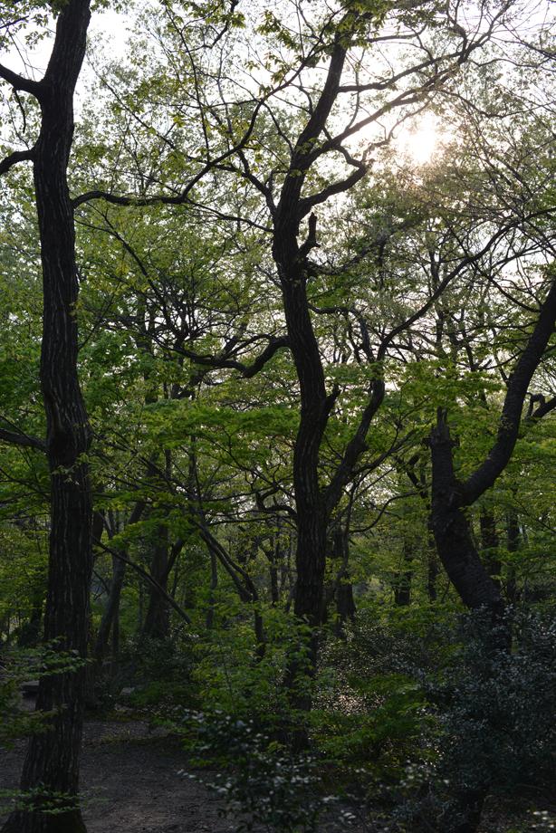 ikoi20170430-16 この竹細工の片隅に 五頭山麓いこいの森
