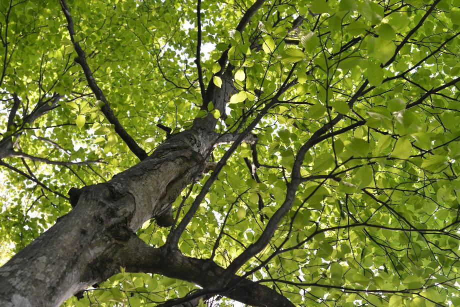 403569038ecc0f74d8a6247f7aab52f0 五頭自然郷をつくる会「森のこだま」とは 五頭山麓いこいの森