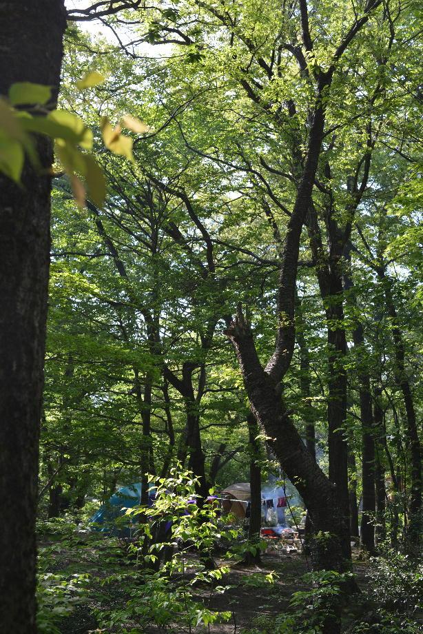 ikoi20170505-07 奥へ行ったらツタがあったので紐を作ってみた 五頭山麓いこいの森
