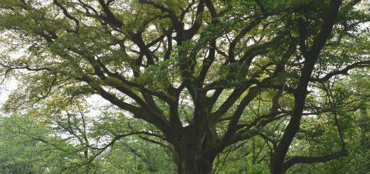いこいの森の主