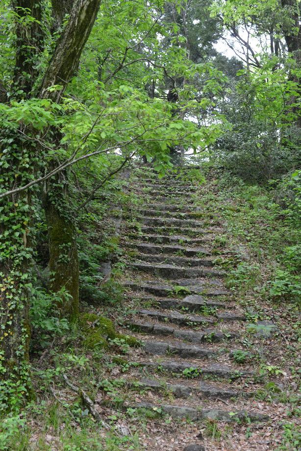 ikoi20170512-02 緑色が濃くなった 五頭山麓いこいの森