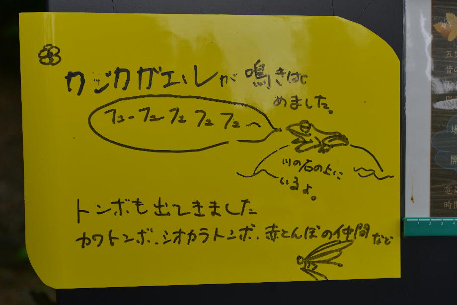 ikoi20170528-01 カジカガエルが鳴き始めました 五頭山麓いこいの森