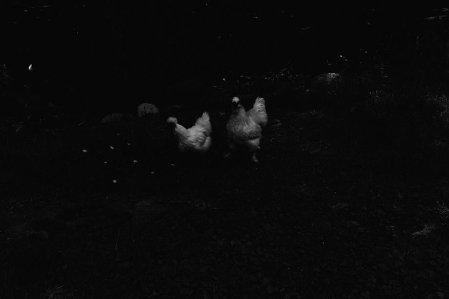 ikoi20170623-04 夏を前に 五頭山麓いこいの森