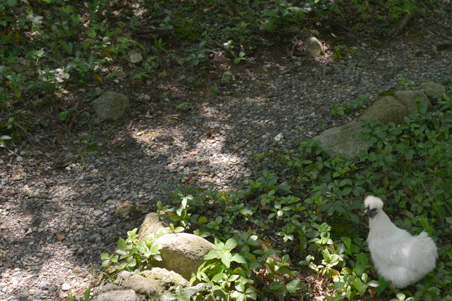 ikoi20170714-05 暑いときは川に行こう 五頭山麓いこいの森