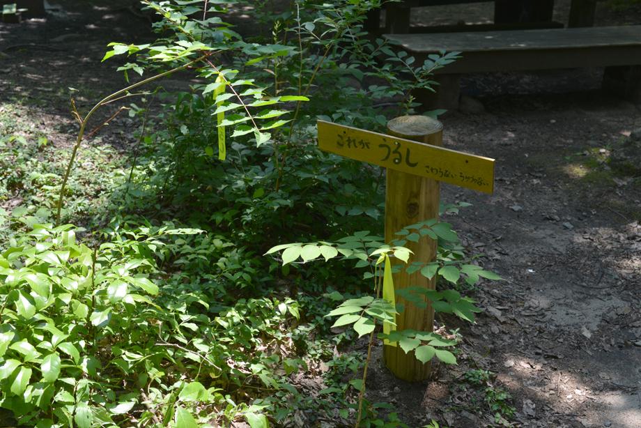 ikoi20170714-09 暑いときは川に行こう 五頭山麓いこいの森