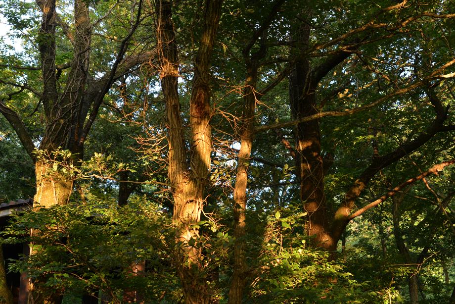 ikoi20170810-07 森の中の虫探し 五頭山麓いこいの森