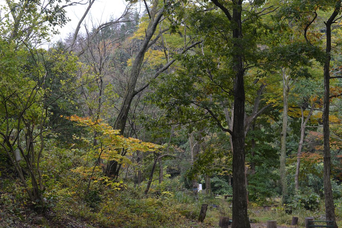 ikoi20171031-03 どんぐりころころ 五頭山麓いこいの森